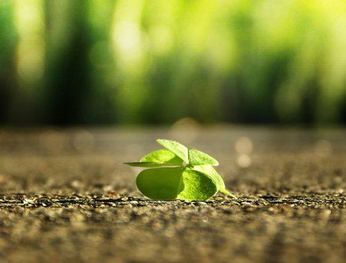 5 câu chuyện hạt giống tâm hồn hay nhất giúp phát triển bản thân toàn diện