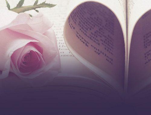 Ý nghĩa màu sắc hoa hồng - ý nghĩa hoa hồng đỏ, vàng, trắng, xanh, tím, cam, đen